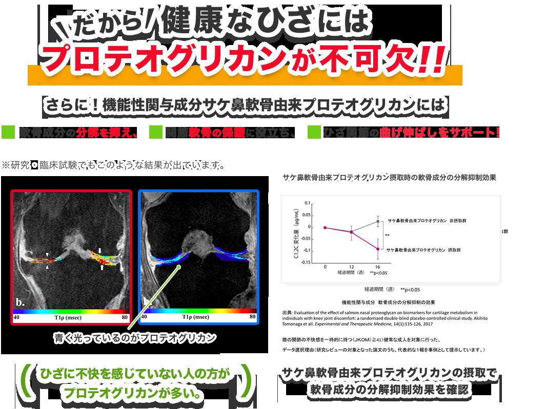 健康なひざにはプロテオグリカンが不可欠!プロテオグリカンにはこんな力があります。①ひざ成分の分解を制御!②関節軟骨の保護に役立つ!③ひざ関節の曲げ伸ばしをサポート!